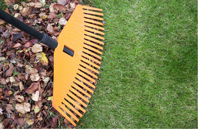 Yard Cleaning Canberra